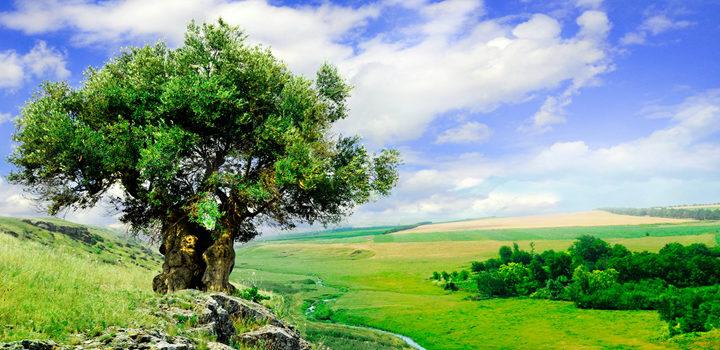 Gyökér és korona – avagy egyensúly a spiritualitásban